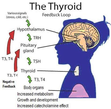 can goiter grow on thyroid hormone picture 6
