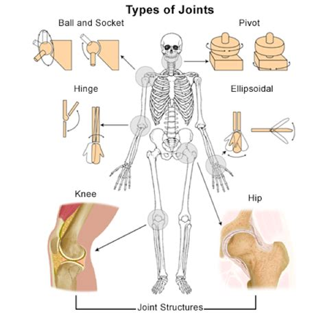 does seasilver help arthritis in the joints picture 8