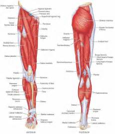 remedies of streatches from body muscles picture 5