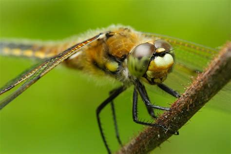 insect picture 14