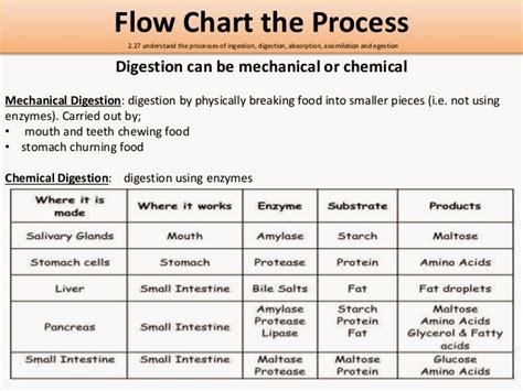 the process of digestion and metabolism of a picture 6