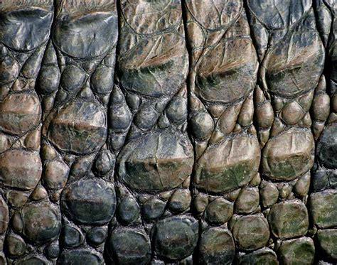 alligator skin on hands picture 5