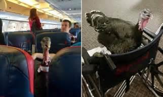 flight attendant taking gordonii picture 2