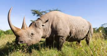 african rhino diet picture 18