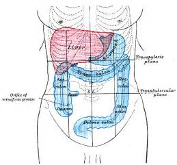 location of colon picture 2