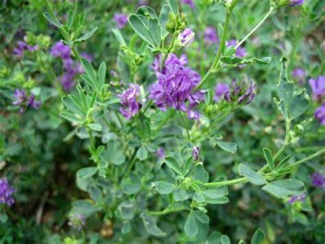 alfalfa and acne picture 11