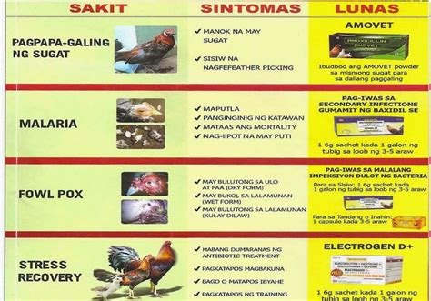 medicine for gamefowl picture 10