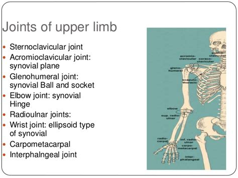 ellipsoid joint picture 14