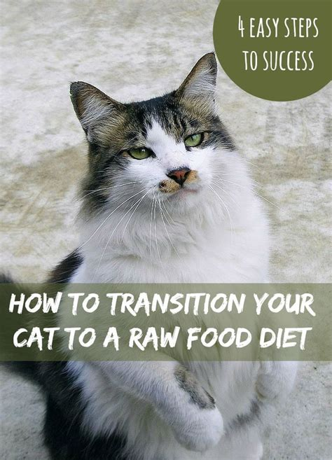 raw diet for cats picture 3