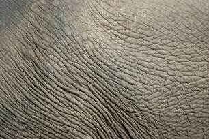 elephanis picture skin picture 10
