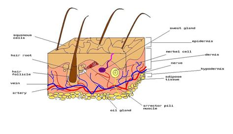 skin care product called root 5 picture 9
