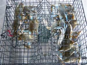 agnijith for sale picture 2