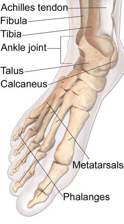 ankle joint pain picture 17