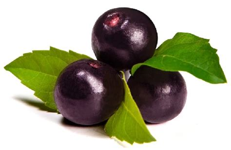 acai berry for harder erection picture 11