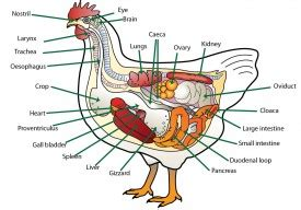 causes of slow digestion picture 11