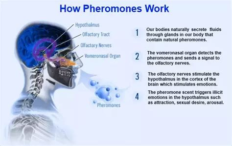 pheromones really work picture 9