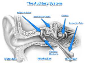 bacterial infections of the inner ear picture 4