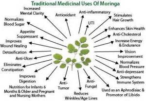 can moringa cure loss of libido picture 14