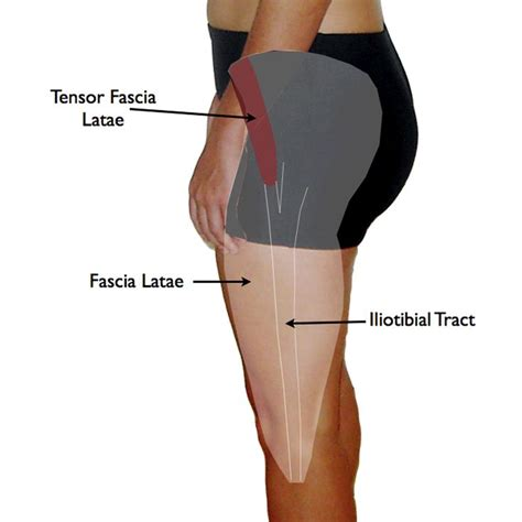 cure for muscle fasciae picture 6