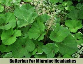 herbal remedy for migraine picture 9