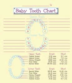 child's teeth chart picture 2