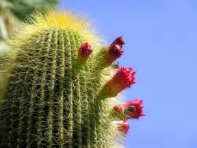 cactus picture 6