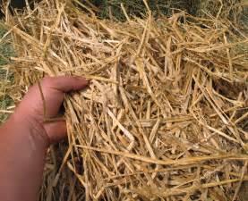 alfalfa price picture 14