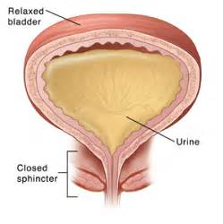 bladder spasms and hormone connections picture 3