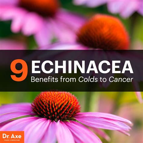 echinacea to quit smoking picture 1