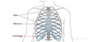 right rib muscle pain relief picture 10