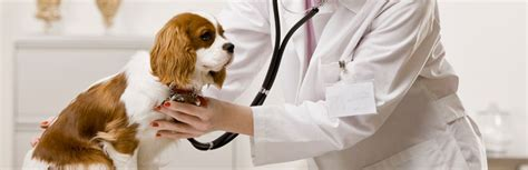 cough suppressant for dogs picture 3