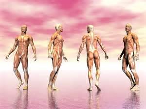stem cells build muscle m april 2014 picture 17