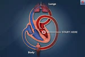 animation of the heart blood flow picture 5
