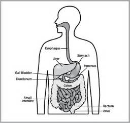 poor digestion and arthritis picture 5
