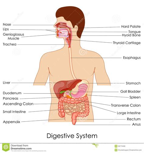 digestion time picture 9
