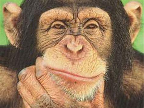 skin color in chimpanzees picture 10