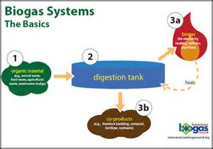the digestion process picture 18