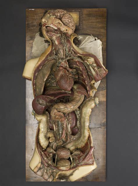 penile skin museum picture 9