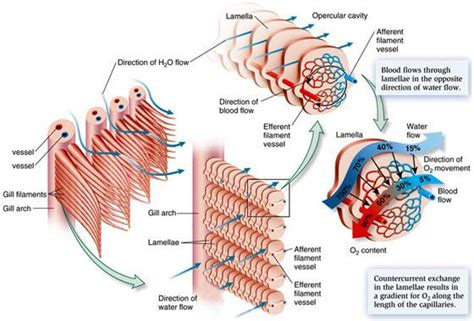 Blood flow of bony picture 5