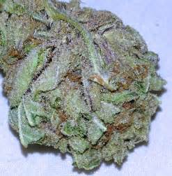 euphoric pain herbs picture 6