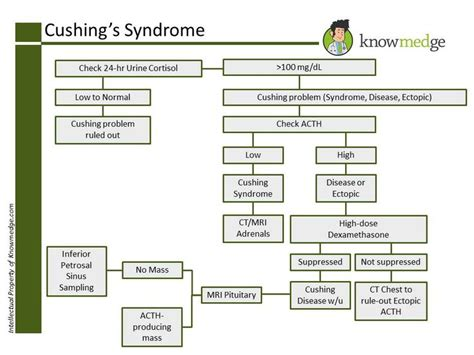cushings decreased libido why? picture 2