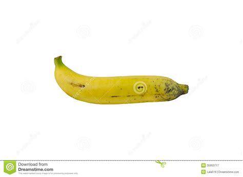 plantain penis picture 13