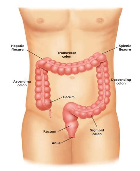 vitamin d colon cancer picture 10