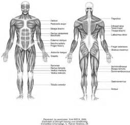 how the muscle system works picture 18