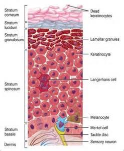 collagen shots picture 11