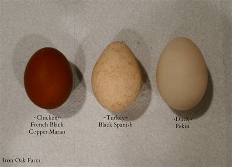 Cholesterol in eggs picture 3