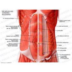 intestinal muscle ilieo picture 11
