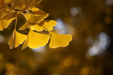 can i take ginkgo biloba with clonidine picture 15