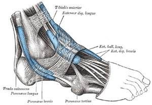 soft tissue injury 5th toe joint picture 9