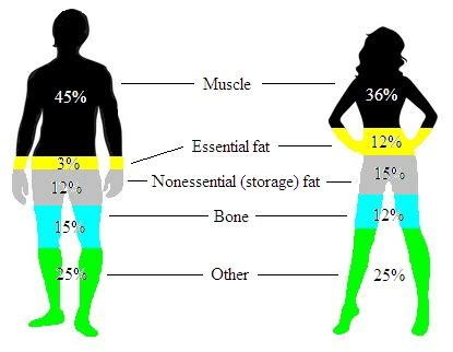 male to female developing feminine body fat picture 11